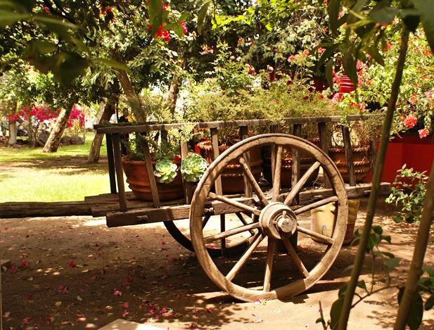 Chololo Jardin