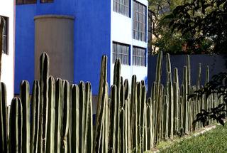Fence Cactus