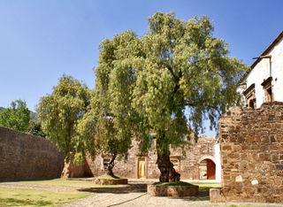 Patio Ex-Convento con Pirul