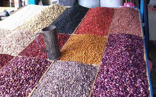 San Cristóbal Beans
