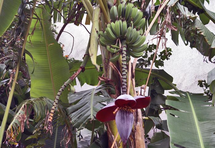 Banana Hand and Flower