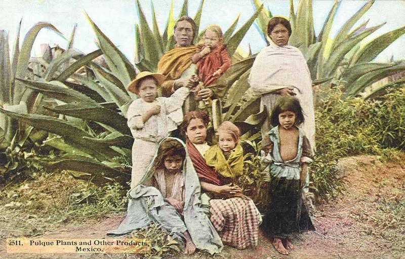 Pulque Postcard