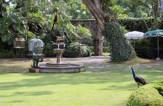 Las Mañanitas Vista al Jardín
