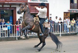 Sta Clara Caballo Bailando