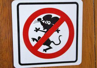 Queso Ratón
