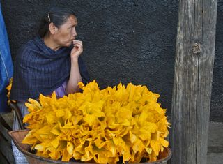 UNESCO Flor de Calabaza por Roset