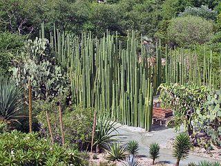 Oaxaca Santo Domingo Jardín Botánico 2