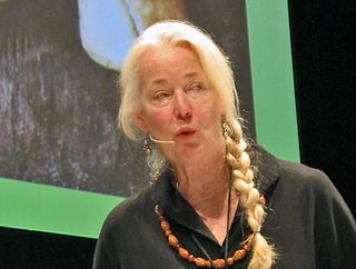 Mesamérica 2 Connie Green Hongos Silvestres