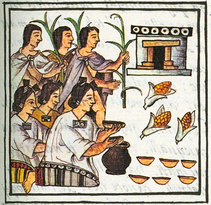 Fiesta de huey tozoztli ofrendas de maíz para Chicomecóatl