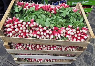 Paris Marché d'Aligre Radishes in Box