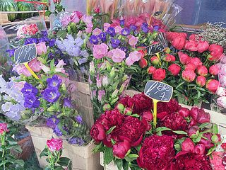 Paris Marché d'Aligre Peonies and Primroses