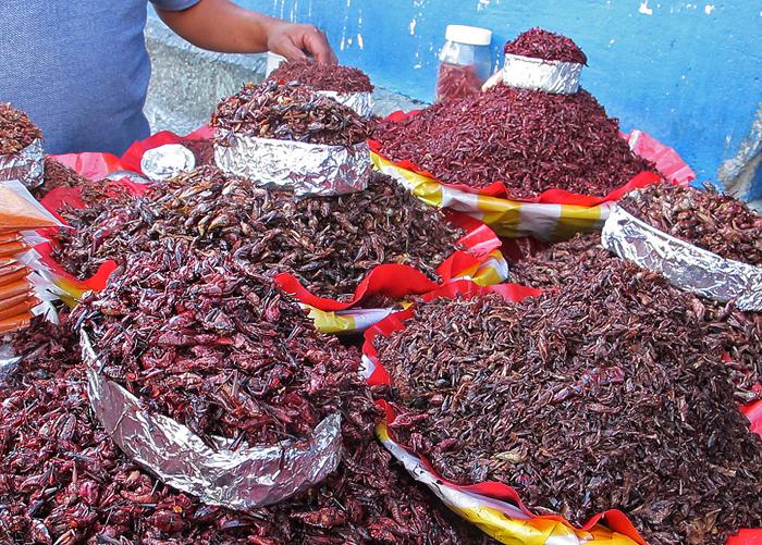 Oaxaca Chapulines