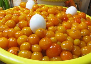 Unlaid Eggs Mercado Jamaica
