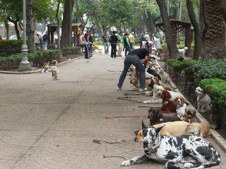 Condesa Parque México Dog School