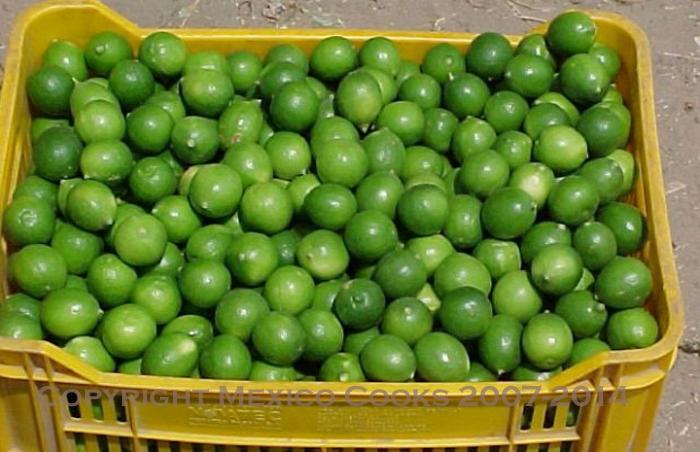 Limón criollo
