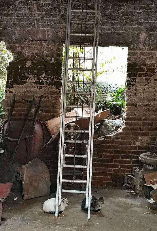 Baker Kitties Ladder Pamela 2