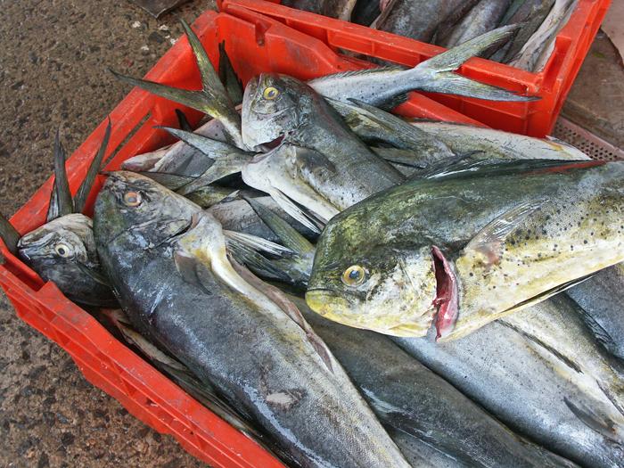Dorado Mercado del Mar