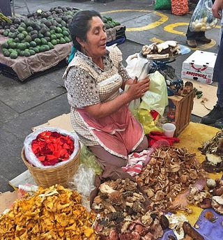 Mercado de Jamaica Wild Mushrooms 2 Sept 2015