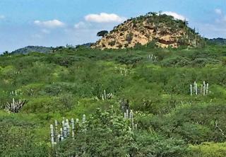 Cueva Biósfera Colina Rocosa 2