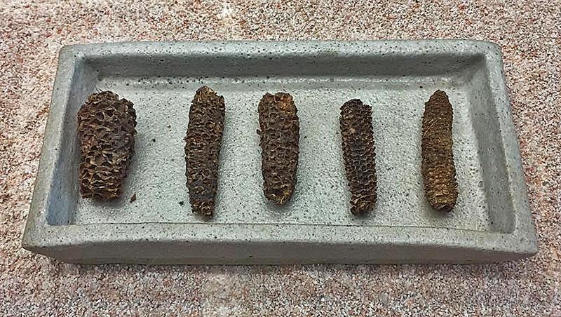 Cueva Museo Olotes Fósiles Rafa