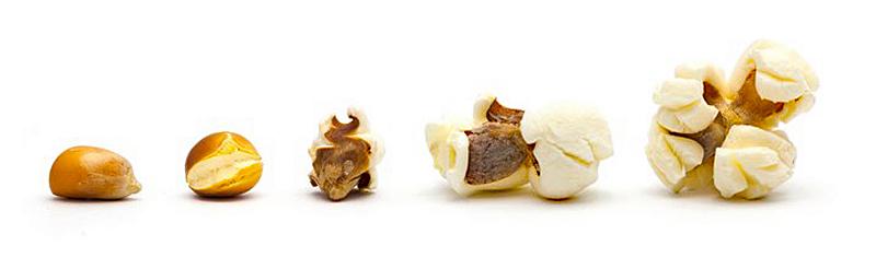 Cosecha unpopped-popcorn