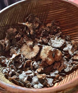 Nakú Desayuno Hongos Silvestres 1