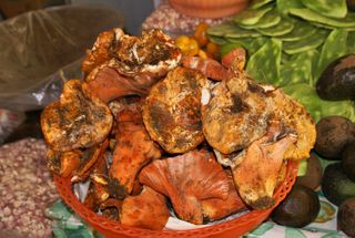 Hongos Silvestres Mercado Santo Niño Morelia