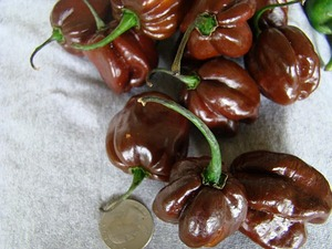 Chile habanero chocolate with coin