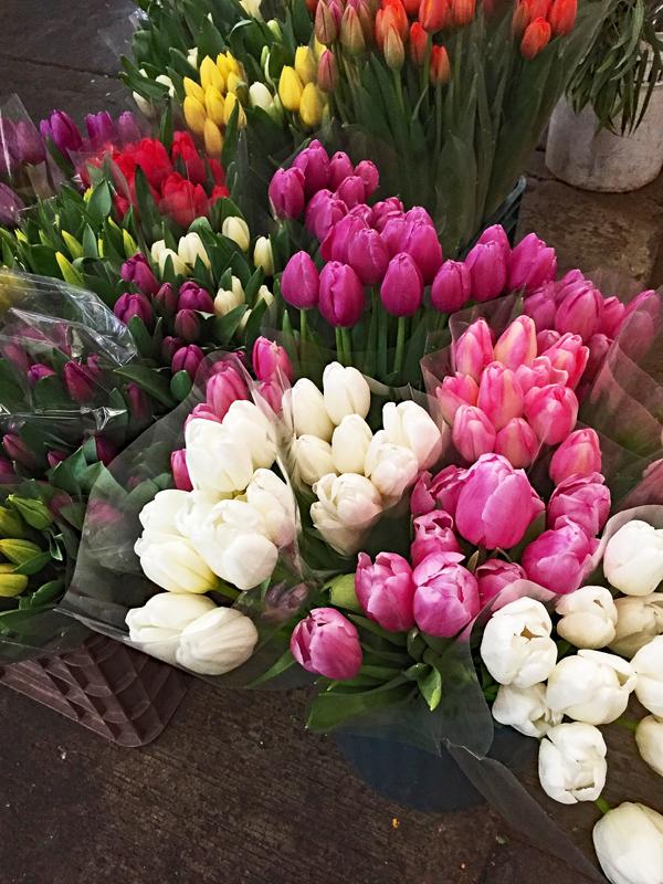Tulips Mercado de Jamaica Jan 2018 1