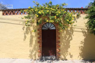 Miguel Blanco 4 Flores