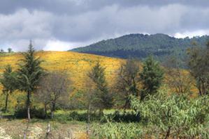 Capula_countryside_2